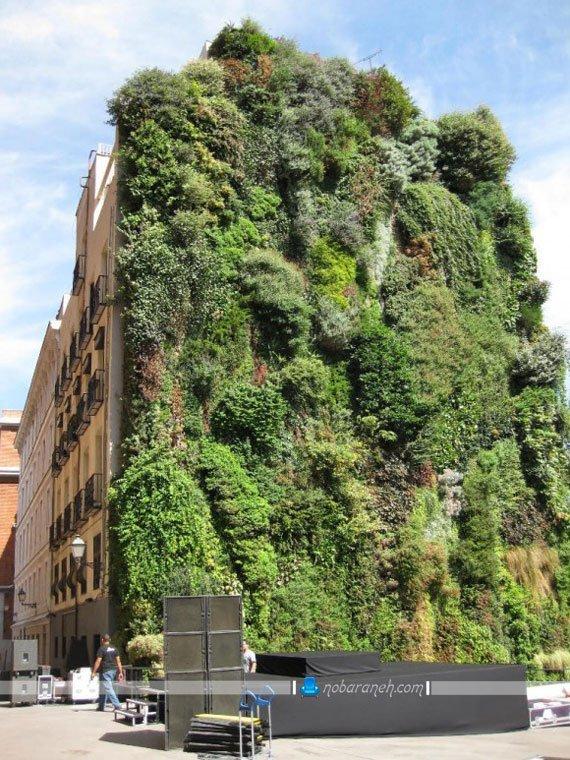 تزیین دیوار خارجی ساختمان با گیاهان پر پشت چسبان