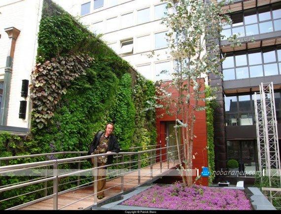 تزیین دیوار حیاط ساختمان و منزل با گیاهان طبیعی