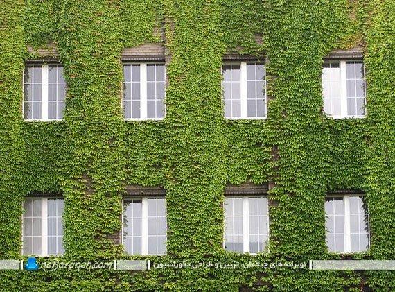 تزیین نمای بیرونی و دیوار حیاط ساختمان با گیاهان سبز