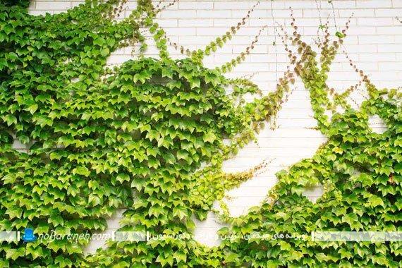 مدلهای تزیین دیوار حیاط خانه و منزل