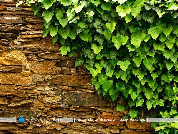 تزیین دیوار حیاط و نمای ساختمان با گیاهان چسبان