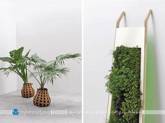گلدان و گیاهان تزئینی و طبیعی برای دکوراسیون داخلی منزل