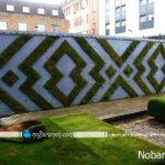 تزیین دیوارهای حیاط خانه با کاشت گیاهان سبز طبیعی