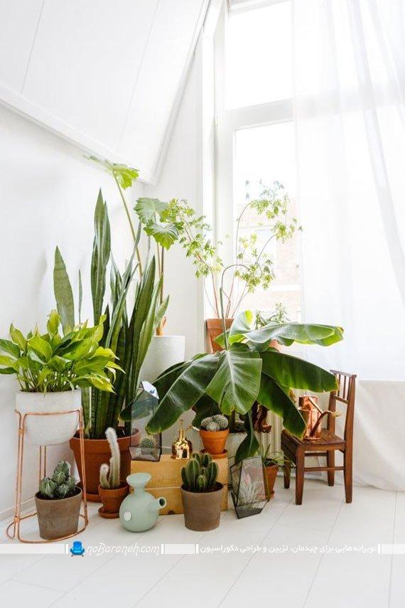 تزیین کنج و گوشه های اتاق ها با گلدان