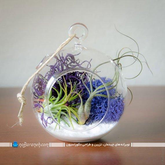 تراریوم و باغ شیشه ای