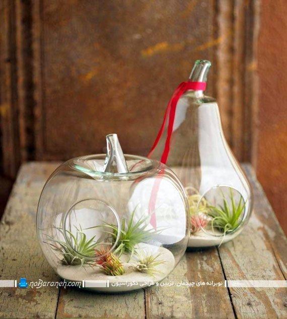 تراریوم و باغ شیشه ای رومیزی