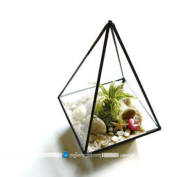 تراریوم و باغ شیشه ای زیبا و مدرن رومیزی