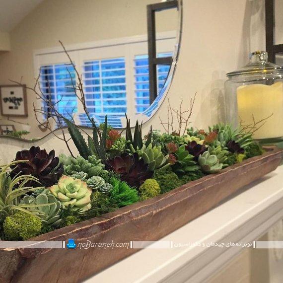 گل کاکتوس ، گلدان بزرگ کاکتوس رومیزی برای تزیین میز و کنسول ، مدل های جدید گلدان رومیزی بزرگ و زیبا