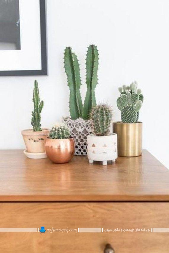 گیاهان اپارتمانی زیبا برای تزیین خانه به شکل کاکتوس، گلدان رومیزی شیک و زیبا و مدرن