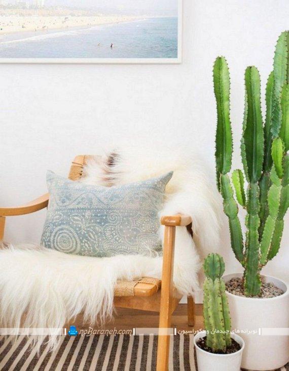 گیاهان آپارتمانی کاکتوس و گران قیمت زینتی و تزیینی شیک طبیعی. گیاهان و گل های آپارتمانی مقاوم به گرما