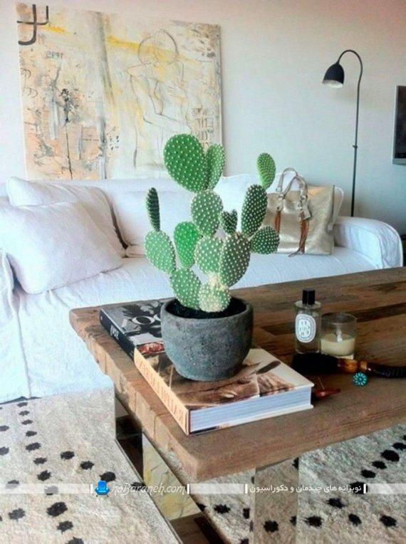 گلدان کاکتوس زیبا ، بهترین گلهای آپارتمانی مقاوم به گرما