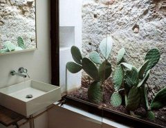 تزیین خانه و منزل با گیاه کاکتوس