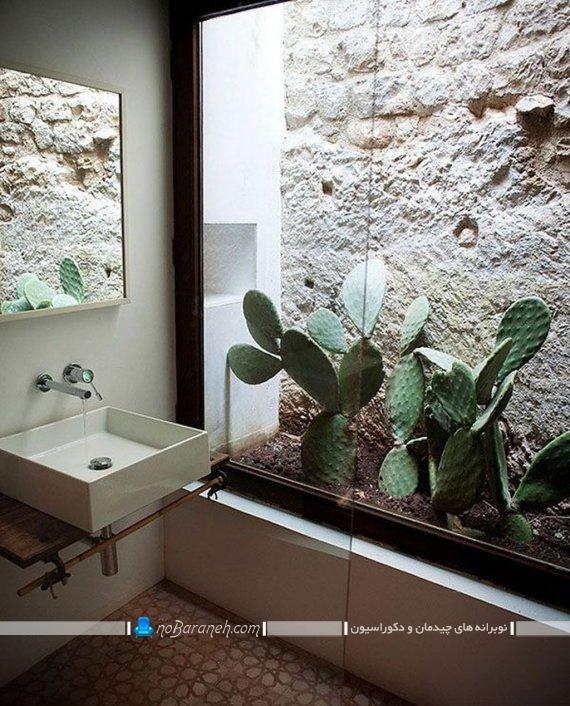 گیاهان آپارتمانی کاکتوس ، تزیین باغچه پاسیو منزل با گل کاکتوس