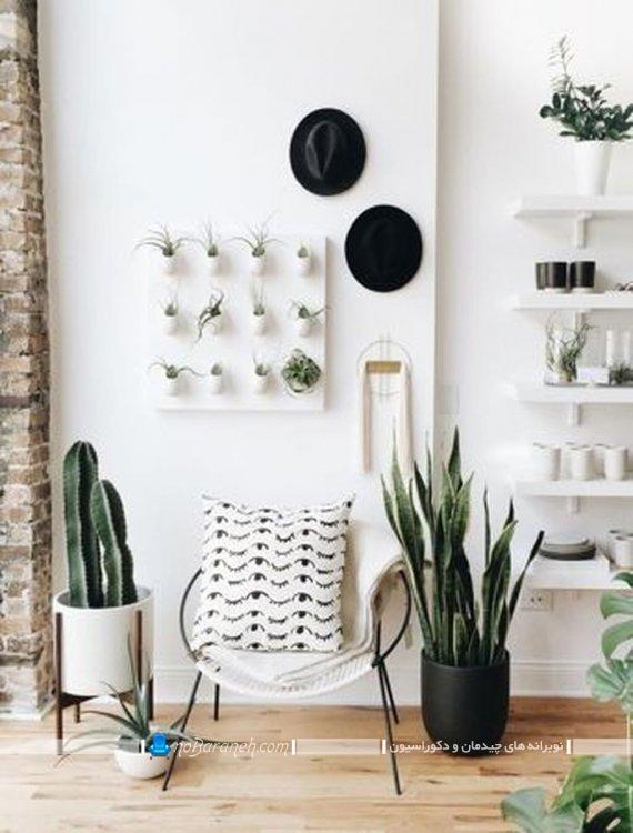 گیاهان آپارتمانی کاکتوس مقاوم به گرما برای تزیین منزل اتاق خواب اتاق پذیرایی