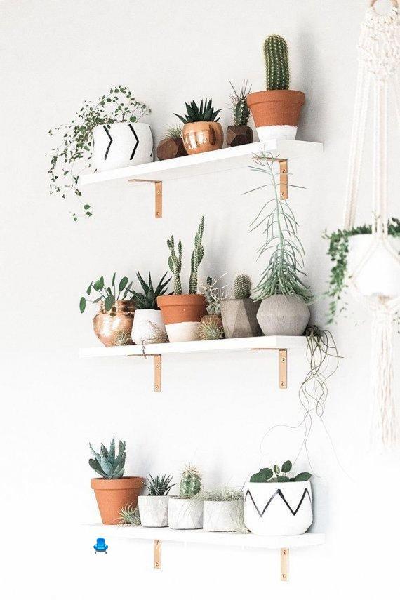 انواع کاکتوس آپارتمانی ، شلف های دیواری برای چیدمان گلدان های آپارتمانی / تزیین شلف دیواری با گلدان کاکتوس ، گلهای آپارتمانی مقاوم