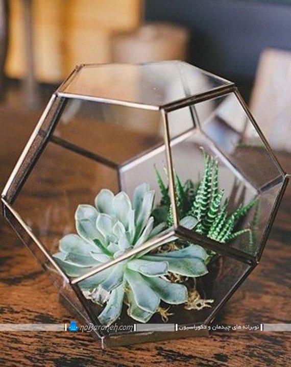 گیاهان آپارتمانی با نام کاکتوس در تراریوم ، تراریوم تزیینی و زینتی رومیزی برای تزیین منزل