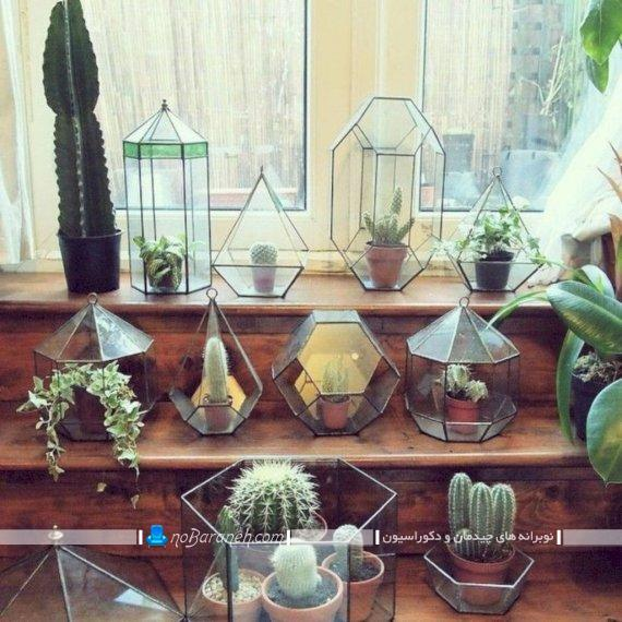 تزیین خانه با گل و گیاه کاکتوس ، گلها و گیاهان آپارتمانی شیک و زیبا برای تزیین منزل