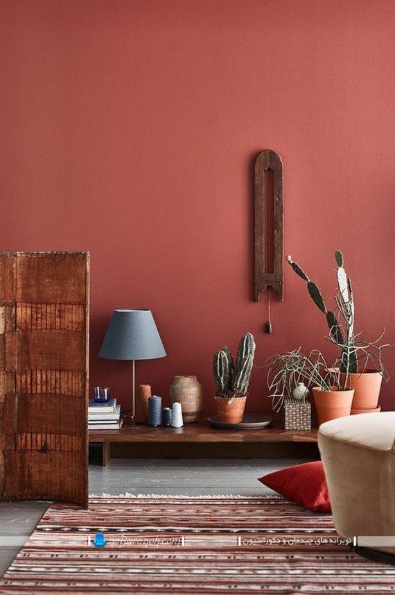 گیاهان اپارتمانی با نام کاکتوس ، تزیین خانه با گلهای زینتی و زیبا به شکل شیک و مدرن